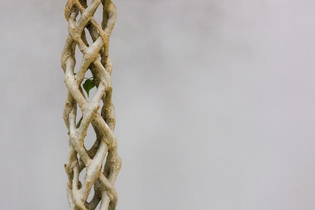 Der stamm eines geflochtenen baumes auf grauem hintergrund