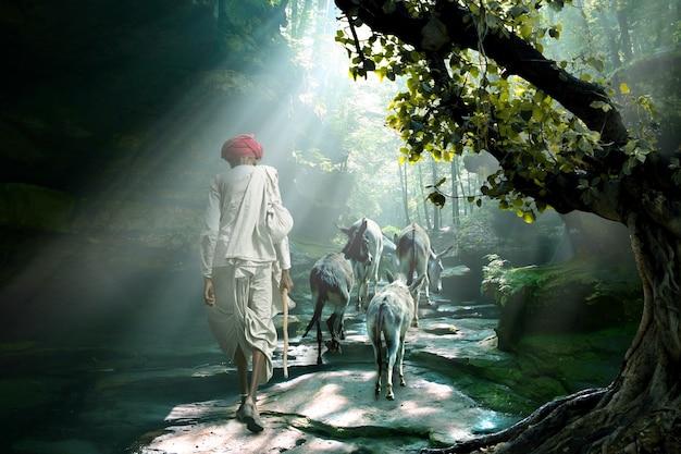 Der stammesmensch von rajasthani trägt einen traditionellen bunten turban und bringt seine eselherde in den sonnenstrahlwald