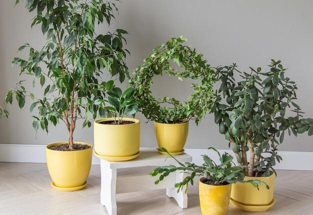 Der stilvolle raum ist mit einer vielzahl moderner grünpflanzen in gelben töpfen gefüllt moderne hausgartenkomposition stilvolles und minimalistisches interieur im großstadtdschungel botanischer hausgarten