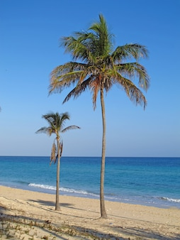 Der strand von karibischem meer auf havana, kuba