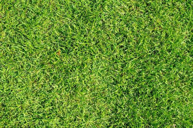 Der texturhintergrund von grünem gras wird verwendet, um sportfelder wie golf, fußball, fußball und gartenarbeit herzustellen. nahaufnahmebild.