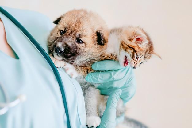 Der tierarzt hält ein kätzchen und einen mischlingswelpen im arm und bereitet sich auf die untersuchung vor