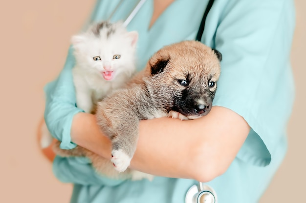 Der tierarzt hält ein weißes kätzchen und einen mischlingswelpen im arm, während er sich auf die untersuchung vorbereitet