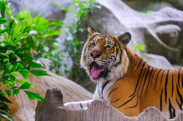 Der tiger ist hinter den grünen zweigen.