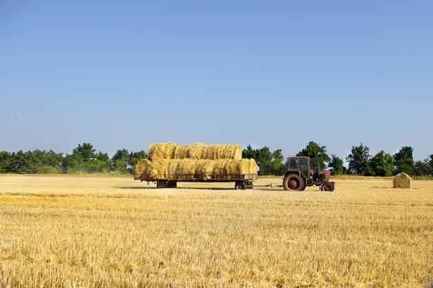 Der traktor, der heuballen trägt, rollt - sie auf stapel stapelnd. landwirtschaftliche maschine, die ballen heu auf einem feld sammelt
