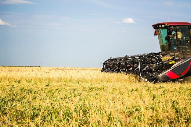 Der traktor schneidet weizen für heulagefutter für non-gmo-kühe