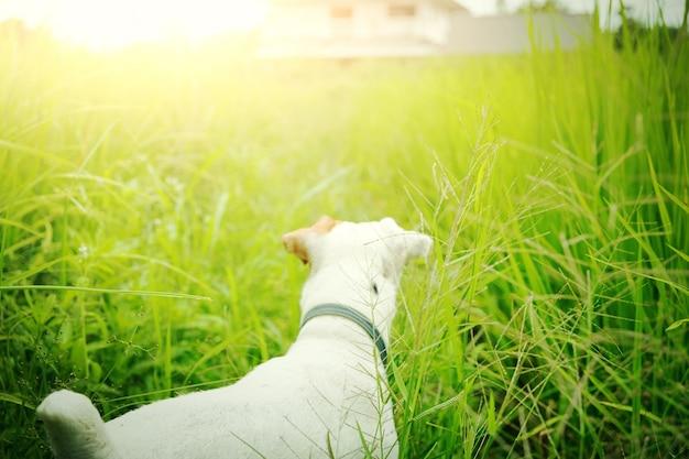 Der verlorene hund findet sein haus. haustier und tier.