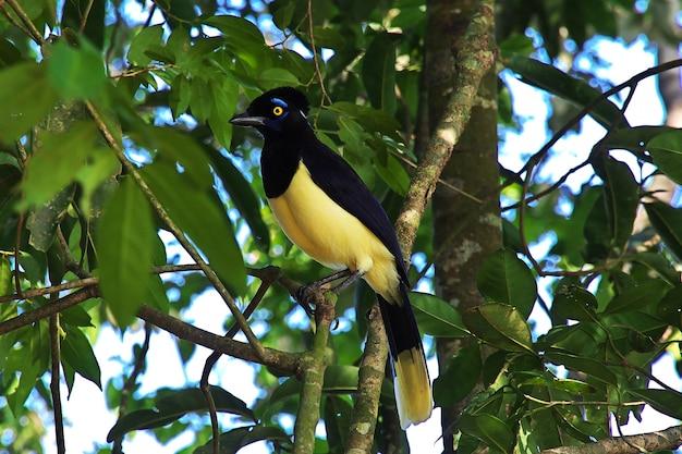 Der vogel auf iguazu fällt in argentinien und brasilien