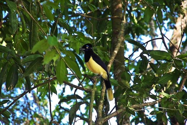 Der vogel auf iguazu fällt in brasilien