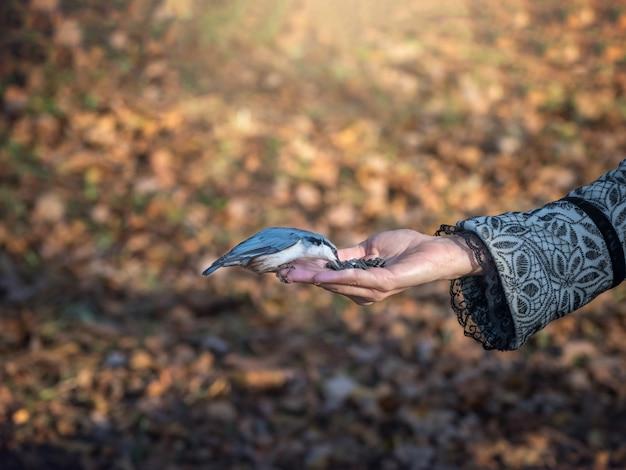 Der vogel frisst futter aus seiner hand. vögel füttern in der natur.