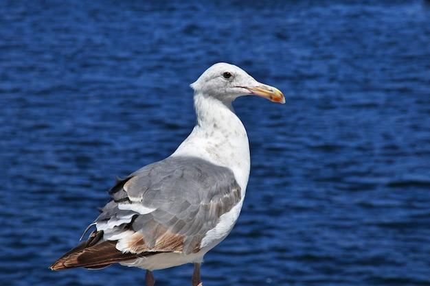 Der vogel im jachthafen, monterey-stadt, westküste, vereinigte staaten