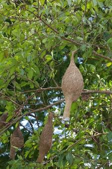 Der vogel im trockenen nest auf baum
