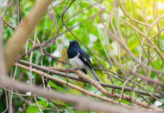 Der vogel ist auf einem ast einer natur
