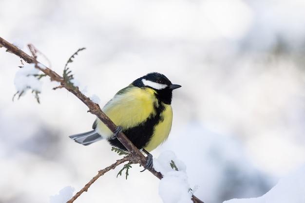 Der vogelpark im winter
