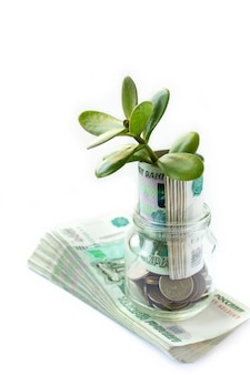 Der wachsende baum vom geld prägt im glasgefäß. kopieren sie platz für geschäfts- und finanzwachstumskonzept. weißer hintergrund.