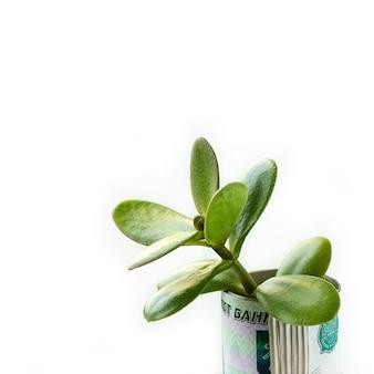 Der wachsende baum vom geld prägt im glasgefäß.