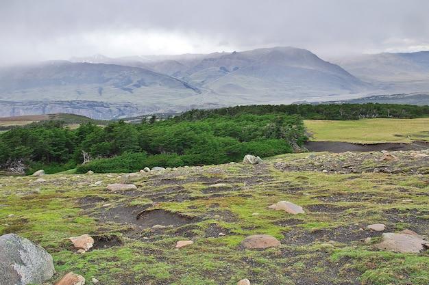 Der wald im los glacier nationalpark nahe fitz roy, el chalten, patagonien, argentinien