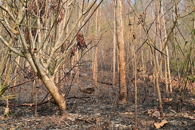 Der wald nach dem brand