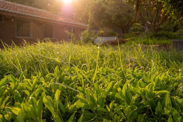 Der warme sonnenschein verleiht dem grünen gras einen gelben farbton