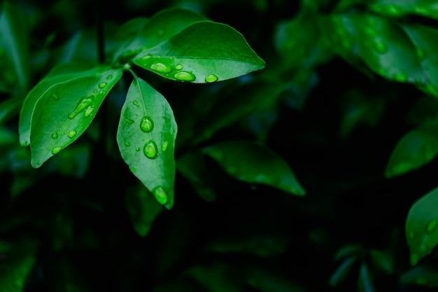 Der wassertropfen auf grünem blatt