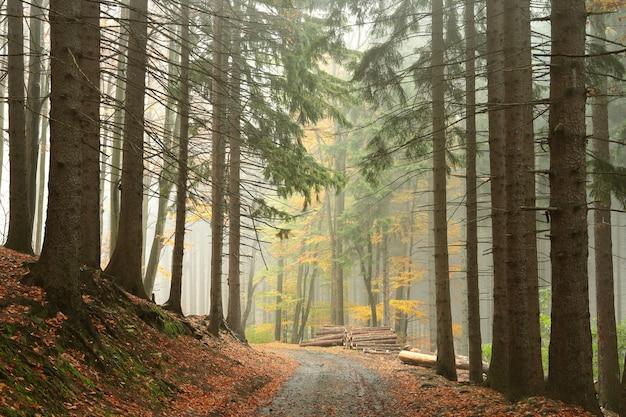 Der weg durch den herbstlichen wald