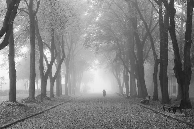 Der weg im park im nebel