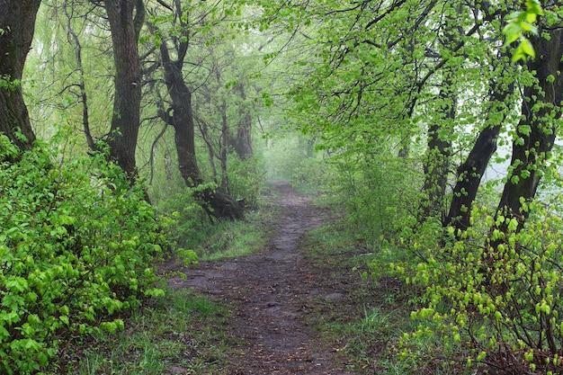 Der weg im sommerwald und nebel