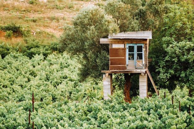 Der weinberg ist eine weinplantage und ein wachhaus