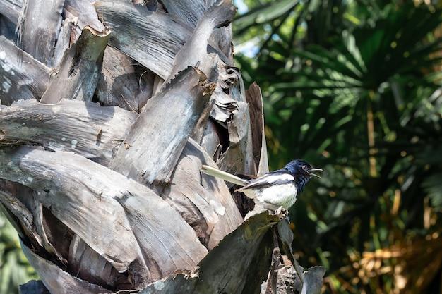 Der weiße körper des vogelblaukopfes auf einem baum.