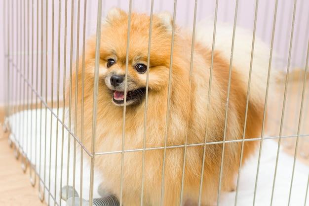 Der welpe eines streunenden hundes hinter gittern eines tierheims für hunde