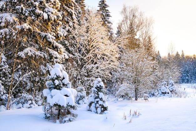 Der winterwald ist mit schnee bedeckt