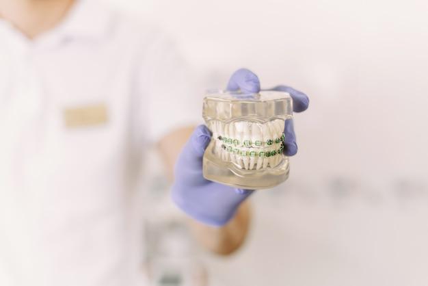 Der zahnarzt zeigt ein künstliches kiefermodell mit zahnspangen. wie man die mundhöhle richtig pflegt, zahnspangen, kosten und konsequenzen setzt
