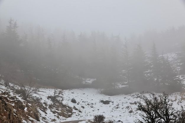 Der zedernwald in den bergen des libanon