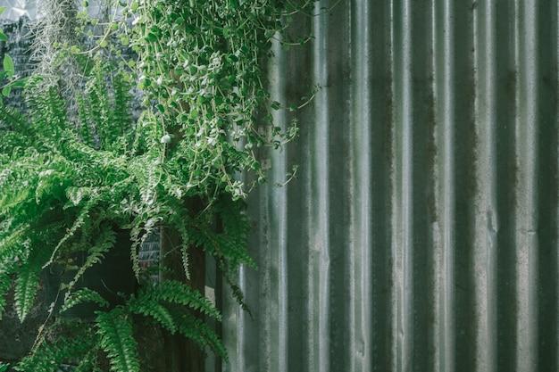 Der zinn rood hintergrund mit dem rost und pflanze