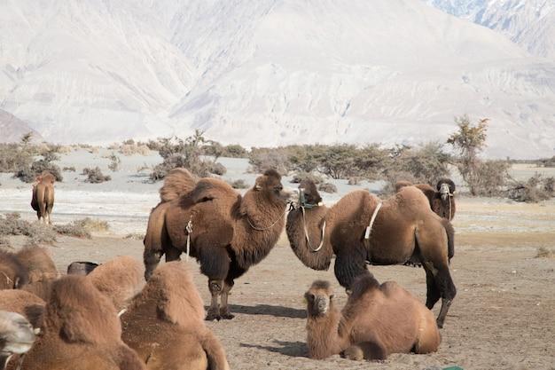 Desertic landschaft auf leh autobahn in himalaja, indien