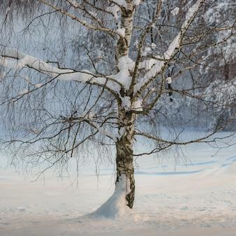 Detail der birkenpflanze unter dem winterschnee