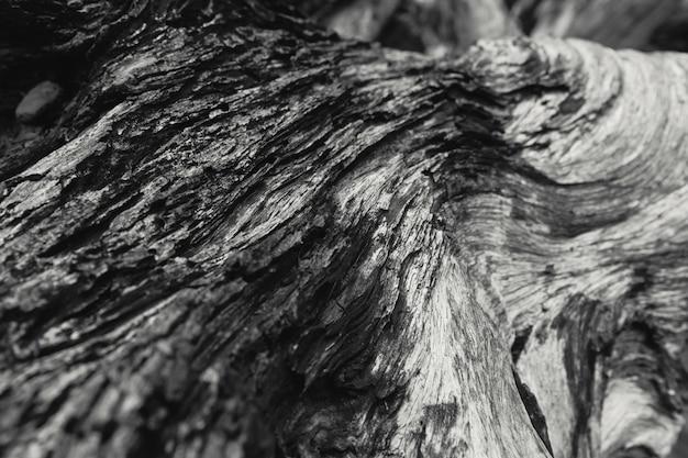 Detail der gestorbenen hölzernen beschaffenheitsschwarzweiss-naturkunstphotographie.