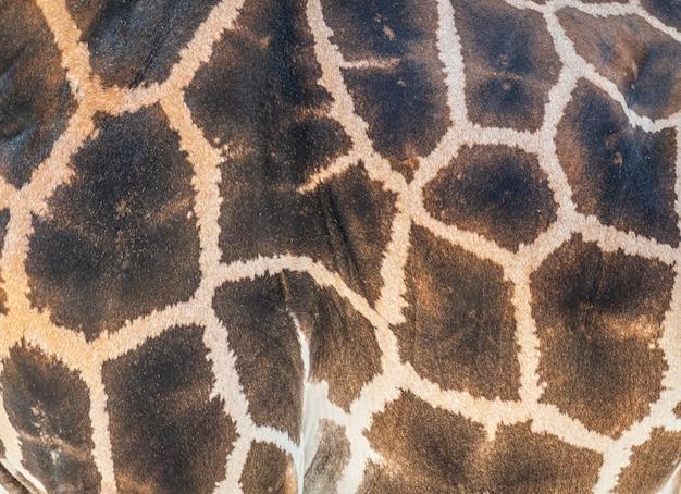 Detail der haut auf einer afrikanischen giraffe
