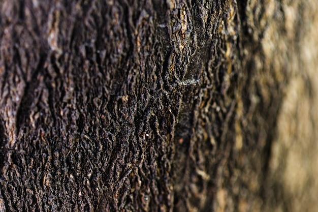 Detail des braunen hölzernen stammes