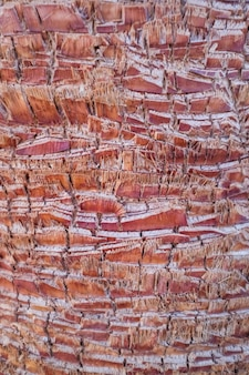 Detail des stammes einer palme, der abgeschnittenen äste und eines rosa stammes einer palme.