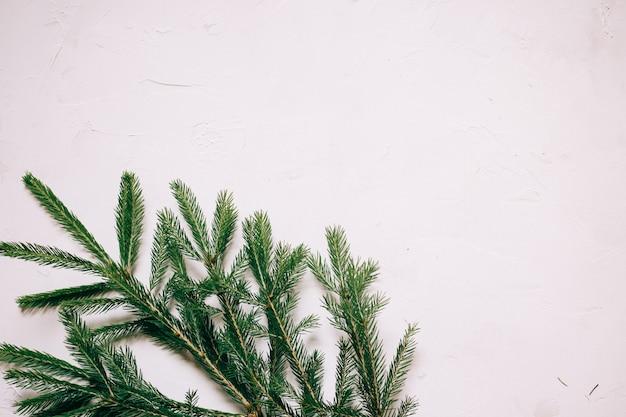 Detail einer weihnachtstannenzweig auf einem weißen strukturierten hintergrund, kopienraum