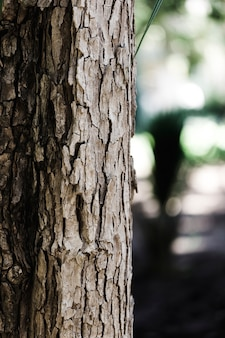 Detail eines braunen stammes
