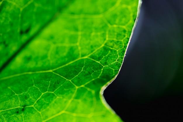 Detail eines grünen blattes