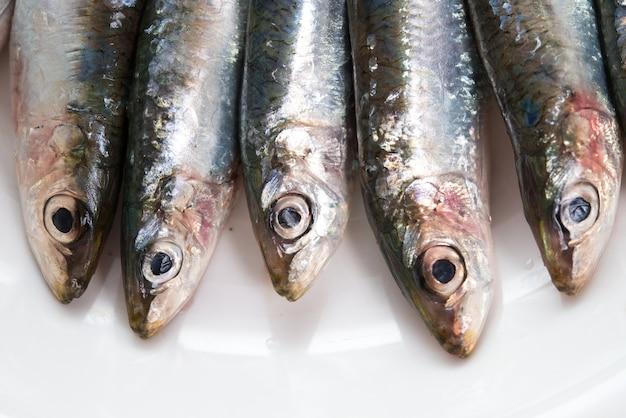 Detail von frischen sardinen