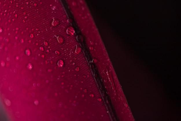 Detail von tröpfchen auf der roten feder gegen schwarzen hintergrund