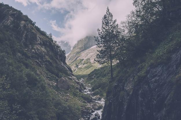 Detailansicht bergszenen im nationalpark dombai, kaukasus, russland, europa. sommerlandschaft, sonnenscheinwetter, dramatischer blauer himmel und sonniger tag
