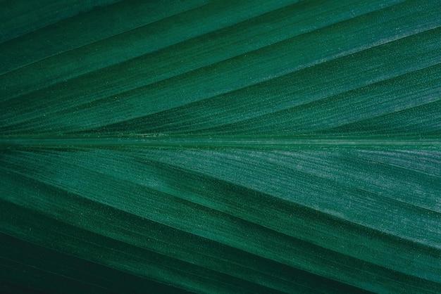 Detailansicht des grünen blattes im garten dunkles tapetenkonzept naturhintergrund tropisches blatt