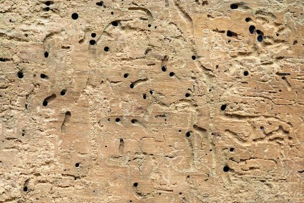 Detaillierte struktur des holzbretts, das von buchsbaum-wanzen zerstört wurde