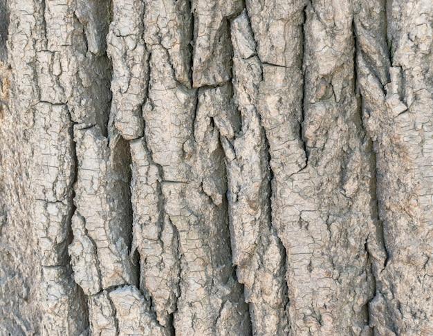 Detaillierte textur der alten pappelrinde mit tiefen rissen. natürlicher baumhintergrund