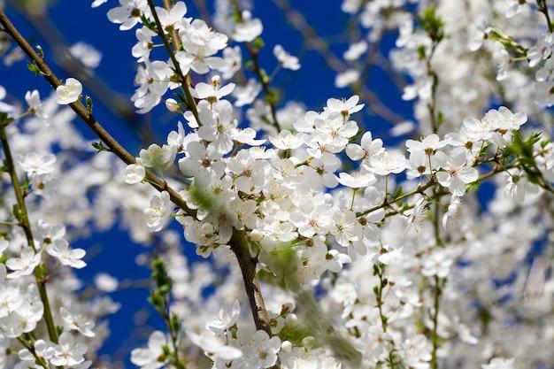 Details der blühenden pflanzen
